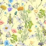 Άνευ ραφής σχέδιο των θερινών wildflowers Στοκ φωτογραφία με δικαίωμα ελεύθερης χρήσης