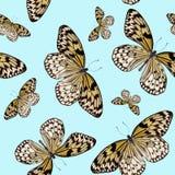 Άνευ ραφής σχέδιο των τροπικών πεταλούδων που απομονώνεται στο μπλε υπόβαθρο Στοκ εικόνα με δικαίωμα ελεύθερης χρήσης