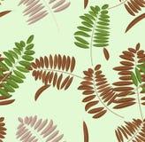 Άνευ ραφής σχέδιο φύλλων ακακιών φθινοπώρου Μαλακοί ανοικτό πράσινο υπόβαθρο και πάγκος κρητιδογραφιών με πράσινο, broun και τα κ απεικόνιση αποθεμάτων