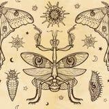 Άνευ ραφής σχέδιο χρώματος: mantis, τροπική πεταλούδα που έχουν μια ουρά, προνύμφες Στοκ εικόνες με δικαίωμα ελεύθερης χρήσης