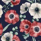 Άνευ ραφής σχέδιο anemone Watercolor στο σκούρο μπλε υπόβαθρο Το χέρι που χρωματίστηκε απομόνωσε τα κόκκινα και άσπρα λουλούδια,  Στοκ Εικόνα