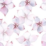 Άνευ ραφής σχέδιο watercolor λουλουδιών Plumeria Στοκ Φωτογραφίες