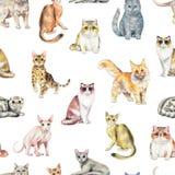 Άνευ ραφής σχέδιο Watercolor με δέκα διαφορετικές φυλές των γατών ελεύθερη απεικόνιση δικαιώματος