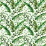 Άνευ ραφής σχέδιο Watercolor με τα τροπικά φύλλα δέντρων Χρωματισμένος χέρι εξωτικός κλάδος πρασινάδων μπανανών και καρύδων στο λ ελεύθερη απεικόνιση δικαιώματος
