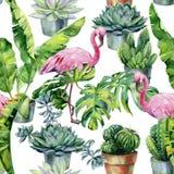 Άνευ ραφής σχέδιο watercolor με το φλαμίγκο και τον κάκτο και succulents στα δοχεία στοκ εικόνα