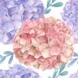 Άνευ ραφής σχέδιο watercolor Hydrangea Στοκ Εικόνα