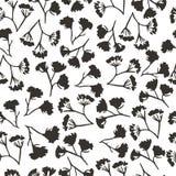 Άνευ ραφής σχέδιο άνηθου λουλουδιών Corolla στοκ φωτογραφία