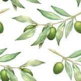 Άνευ ραφής σχέδιο κλαδί ελιάς Watercolor Στοκ Εικόνες