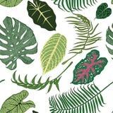 Άνευ ραφής σχέδιο με τα εξωτικά φύλλα στο άσπρο υπόβαθρο Στοκ Εικόνα