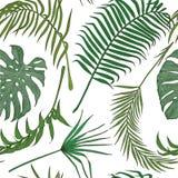 Άνευ ραφής σχέδιο με τα εξωτικά φύλλα στο άσπρο backround Στοκ φωτογραφία με δικαίωμα ελεύθερης χρήσης
