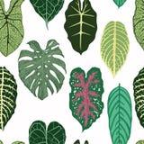 Άνευ ραφής σχέδιο με τα εξωτικά φύλλα στο άσπρο backround Στοκ Εικόνες