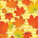 Άνευ ραφής σχέδιο με τα ζωηρόχρωμα φύλλα σφενδάμου Στοκ Εικόνες