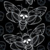 Άνευ ραφής σχέδιο με τα διαστιγμένα atropos σκώρων ή Acherontia γερακιών του θανάτου επικεφαλής στο λευκό και τα κρανία Στοκ φωτογραφίες με δικαίωμα ελεύθερης χρήσης