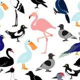Άνευ ραφής σχέδιο με τα διαφορετικά πουλιά στο άσπρο υπόβαθρο Στοκ Εικόνες