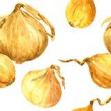 Άνευ ραφής σχέδιο με τα κρεμμύδια σχεδίων watercolor Στοκ Εικόνα