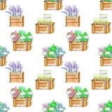Άνευ ραφής σχέδιο με τα πικάντικα χορτάρια καρυκευμάτων watercolor ξύλινα κιβώτια Ελεύθερη απεικόνιση δικαιώματος
