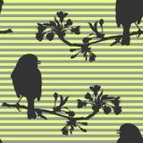 Άνευ ραφής σχέδιο με τα πουλιά στον κλάδο του κερασιού επίσης corel σύρετε το διάνυσμα απεικόνισης Στοκ Εικόνα