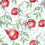 Άνευ ραφής σχέδιο με τα ρόδια watercolor (γρανάτες) Στοκ Εικόνες