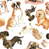 Άνευ ραφής σχέδιο με τα σκυλιά: Σκυλί του ST Bernard, dachshund, chow chow, poodle, μαλαγμένος πηλός Στοκ φωτογραφία με δικαίωμα ελεύθερης χρήσης