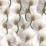 Άνευ ραφής σχέδιο με τα φύλλα του φυτού Στοκ Φωτογραφίες