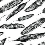 Άνευ ραφής σχέδιο με τα φύλλα φοινικών μπανανών συρμένο χέρι Στοκ Εικόνες