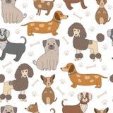 Άνευ ραφής σχέδιο με τα χαριτωμένα σκυλιά Στοκ Φωτογραφία