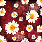Άνευ ραφής σχέδιο με τα chamomiles στο κόκκινο υπόβαθρο με τα ευθυγραμμισμένα λουλούδια Στοκ Εικόνες