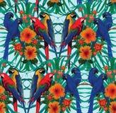 Άνευ ραφής σχέδιο με τα macaws, τα λουλούδια και τα φύλλα φοινικών Στοκ Εικόνες