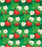 Άνευ ραφής σχέδιο με τις φράουλες στις μορφές καρδιών Στοκ Φωτογραφία