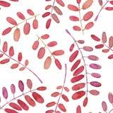 Άνευ ραφής σχέδιο με τους κλάδους δέντρων ακακιών watercolor διανυσματική απεικόνιση