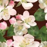 Άνευ ραφής σχέδιο με το δέντρο της Apple λουλουδιών Στοκ Εικόνες