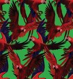Άνευ ραφής σχέδιο με το κόκκινο πέταγμα macaws Χέρι Στοκ Εικόνα