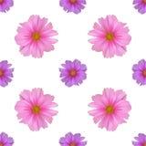 Άνευ ραφής σχέδιο με το λουλούδι κόσμου Στοκ φωτογραφία με δικαίωμα ελεύθερης χρήσης