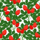 Άνευ ραφής σχέδιο με το rosehig Στοκ Εικόνα