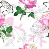 Άνευ ραφής σχέδιο με τριαντάφυλλο-06 Στοκ Εικόνα