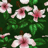 Άνευ ραφής σχέδιο με Hibiscus τα λουλούδια Στοκ εικόνα με δικαίωμα ελεύθερης χρήσης