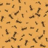 Άνευ ραφής σχέδιο μυρμηγκιών ελεύθερη απεικόνιση δικαιώματος