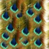 Άνευ ραφής σχέδιο μόδας με τα ζωηρόχρωμα φτερά peacock Στοκ Εικόνες