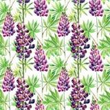 Άνευ ραφής σχέδιο λουλουδιών με τα lupines watercolor απεικόνιση αποθεμάτων