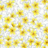 Άνευ ραφής σχέδιο λουλουδιών watercolor Floral σχέδιο Plumeria Στοκ Εικόνες