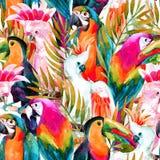 Άνευ ραφής σχέδιο παπαγάλων Watercolor Στοκ εικόνες με δικαίωμα ελεύθερης χρήσης
