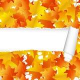 Άνευ ραφής σχέδιο σφενδάμνου φθινοπώρου με το σχισμένο λωρίδα Στοκ Εικόνα