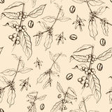Άνευ ραφής σχέδιο του δέντρου καφέ ελεύθερη απεικόνιση δικαιώματος