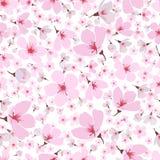 Άνευ ραφής σχέδιο του ρόδινου άνθους Sakura άνοιξη διανυσματική απεικόνιση