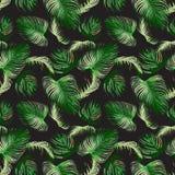 Άνευ ραφής σχέδιο του τροπικού πράσινου areca φύλλου, φυσικό διάνυσμα Στοκ εικόνα με δικαίωμα ελεύθερης χρήσης