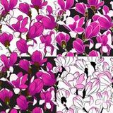 Άνευ ραφής σχέδιο του magnolia Στοκ Φωτογραφίες