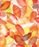 Άνευ ραφής σχέδιο των φωτεινών φύλλων φθινοπώρου στο ύφος grunge Στοκ Φωτογραφίες