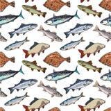 Άνευ ραφής σχέδιο των ψαριών θάλασσας ύφους σκίτσων, διανυσματική απεικόνιση Στοκ εικόνα με δικαίωμα ελεύθερης χρήσης