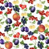 Άνευ ραφής σχέδιο φρούτων και μούρων Watercolor στοκ εικόνα
