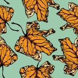 Άνευ ραφής σχέδιο φύλλων σφενδάμου Στοκ Εικόνες